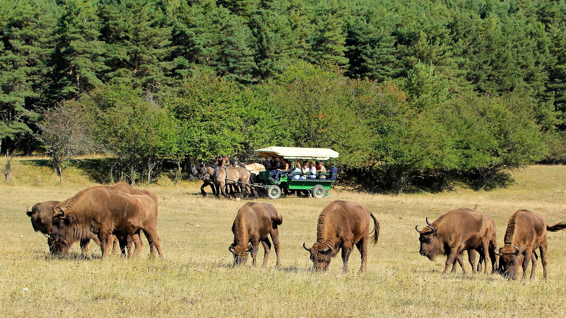 Safari guidé en Calèche d'une heure